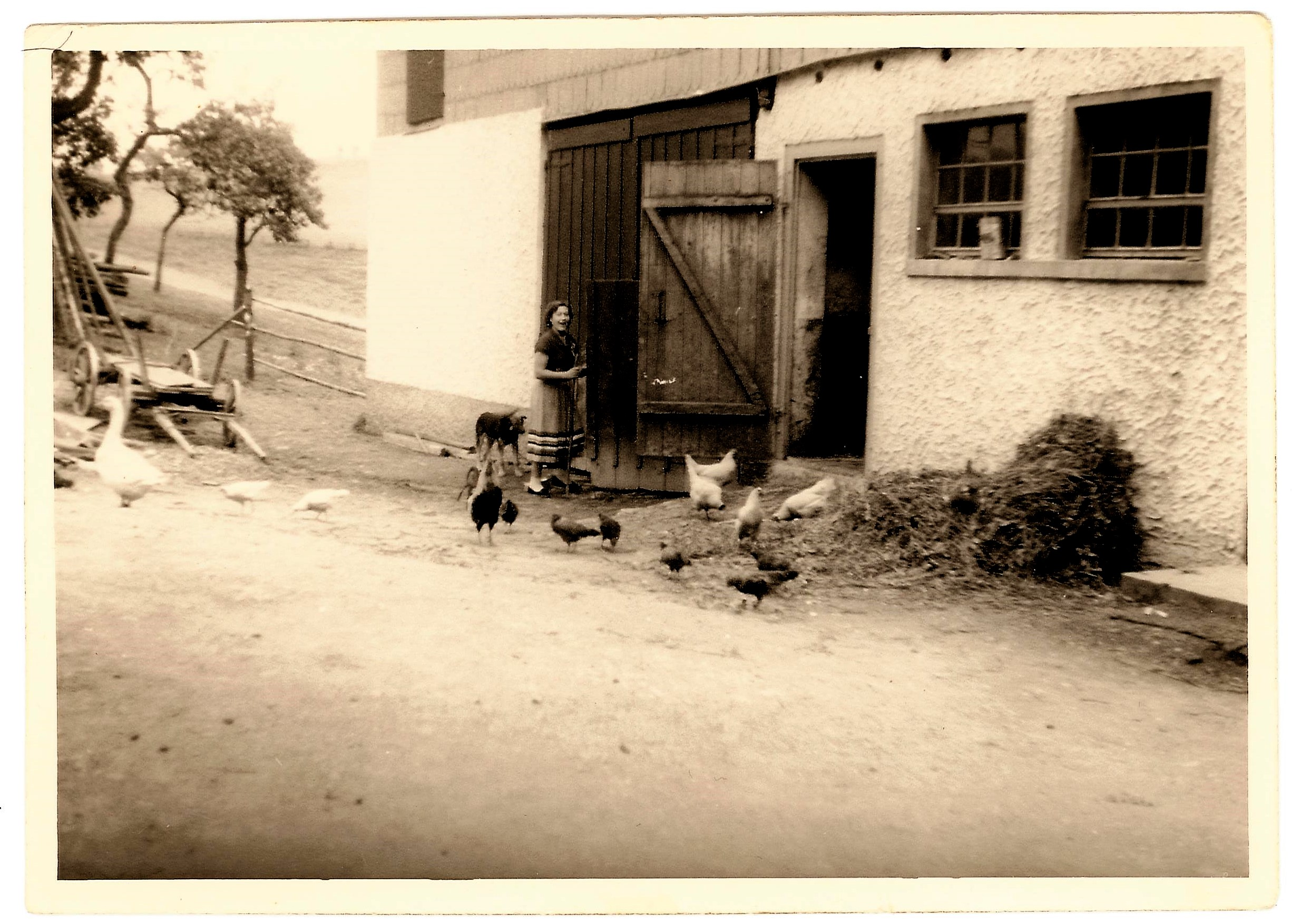 Barons Hof mit Hühnern