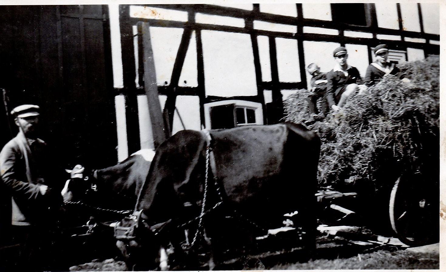 Unterwiesen Pade mit Heuwagen und Kuhgespann